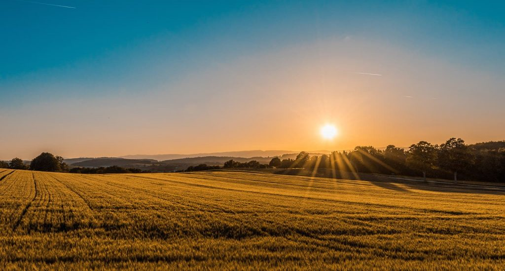 Ozono Agricultura